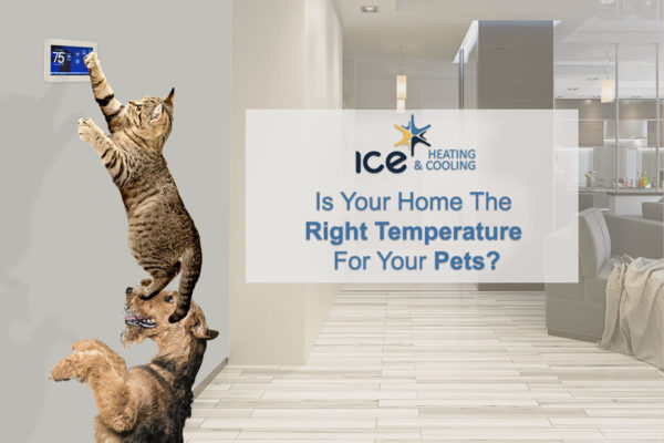Right AC Temperature for Pets